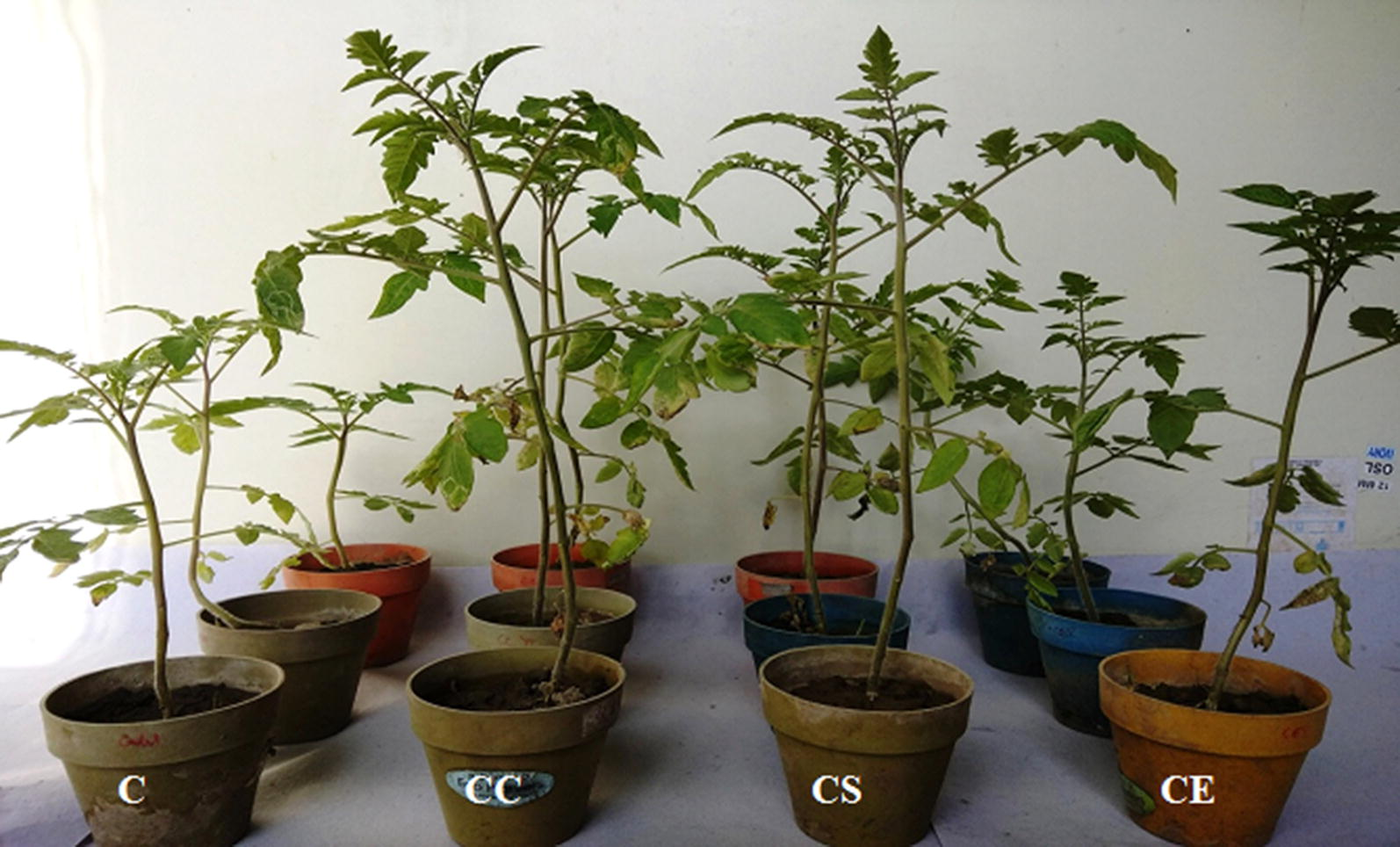 Biocontrol and plant growth promoting potential of