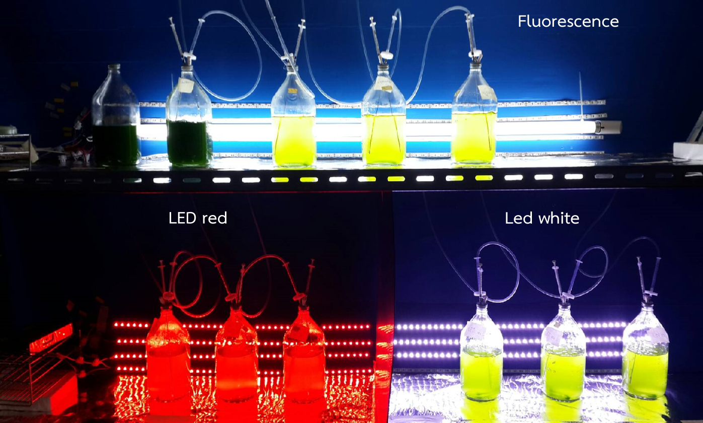 Modeling the effects of light sources on the growth of algae