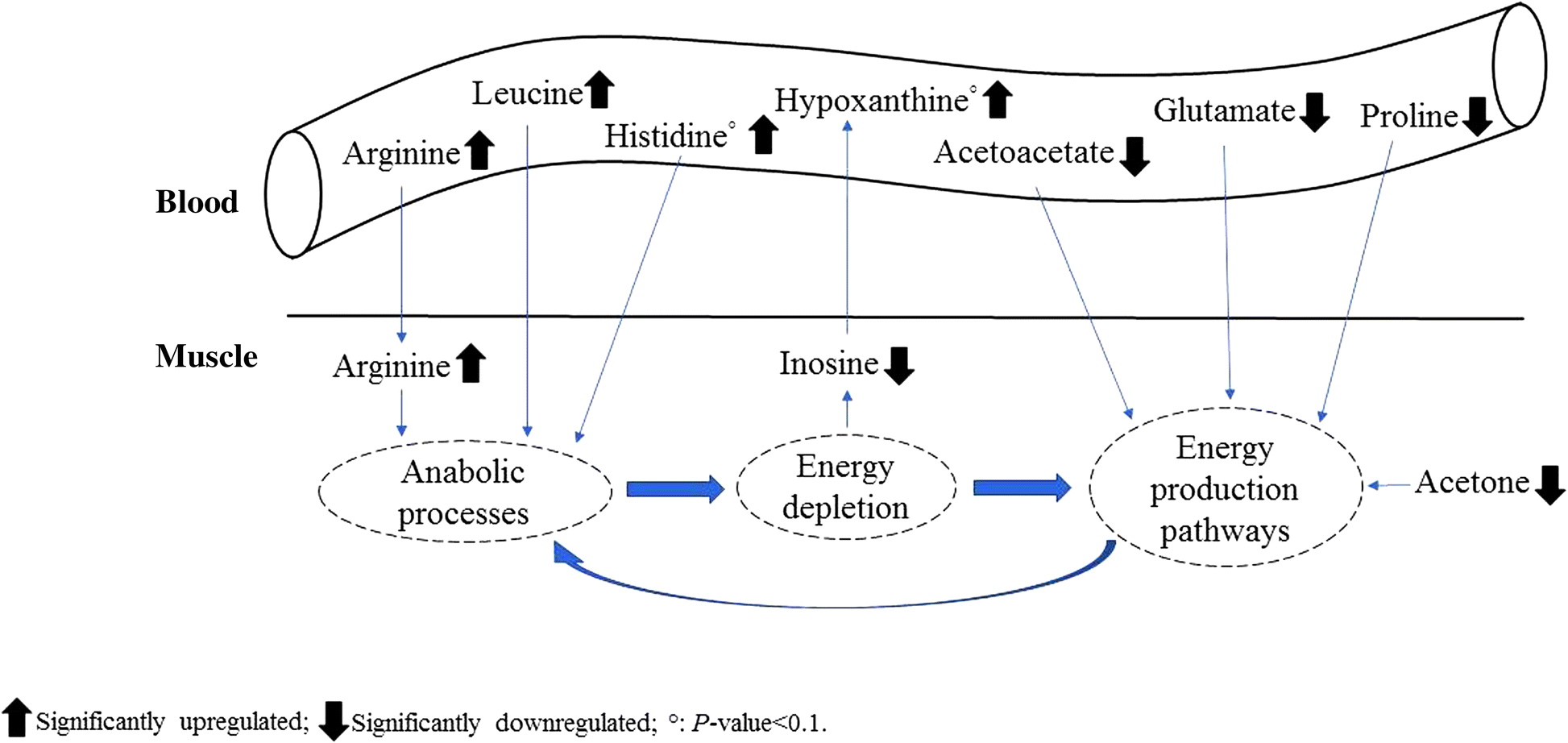 Effect of dietary arginine to lysine ratios on productive