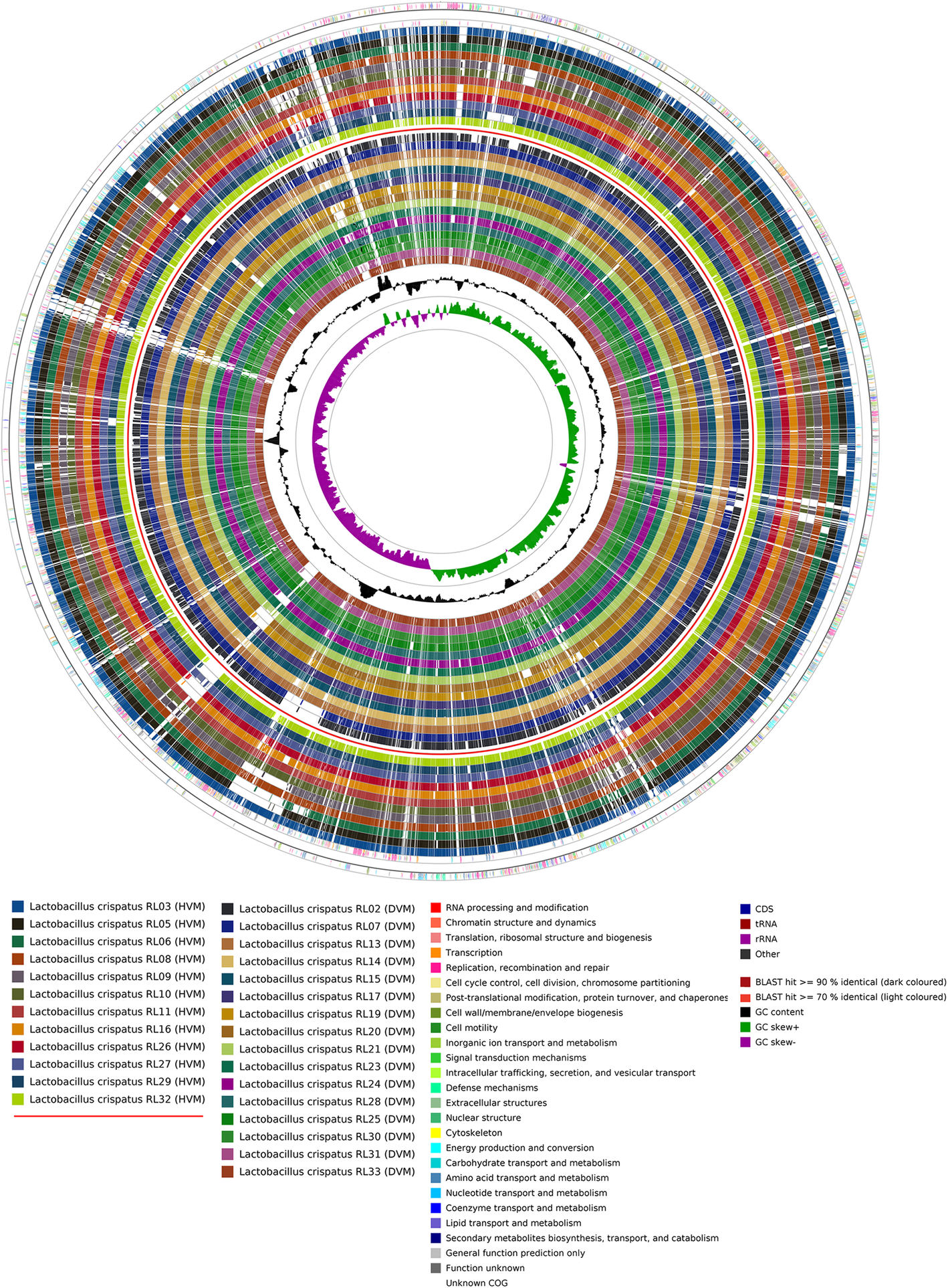 Comparative genomics of human Lactobacillus crispatus