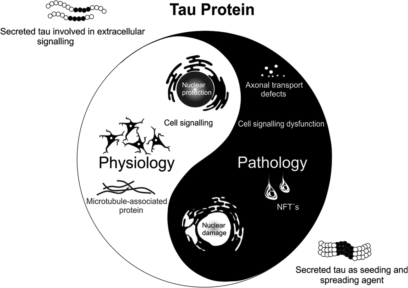 A walk through tau therapeutic strategies | SpringerLink