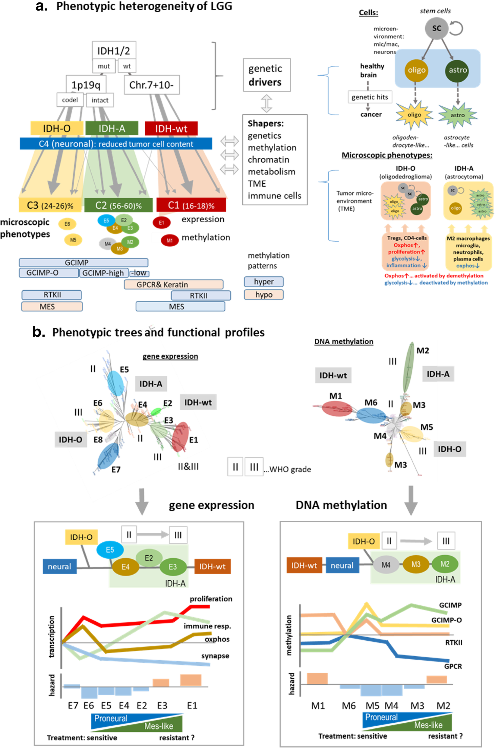 DNA methylation, transcriptome and genetic copy number