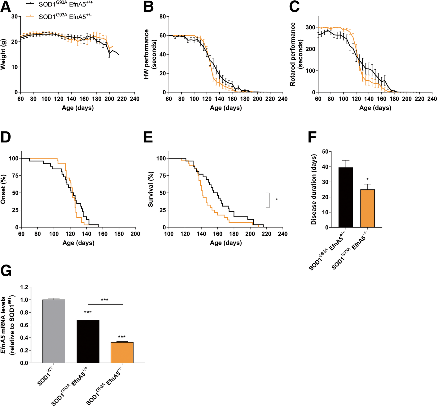 Reduction of ephrin-A5 aggravates disease progression in amyotrophic on