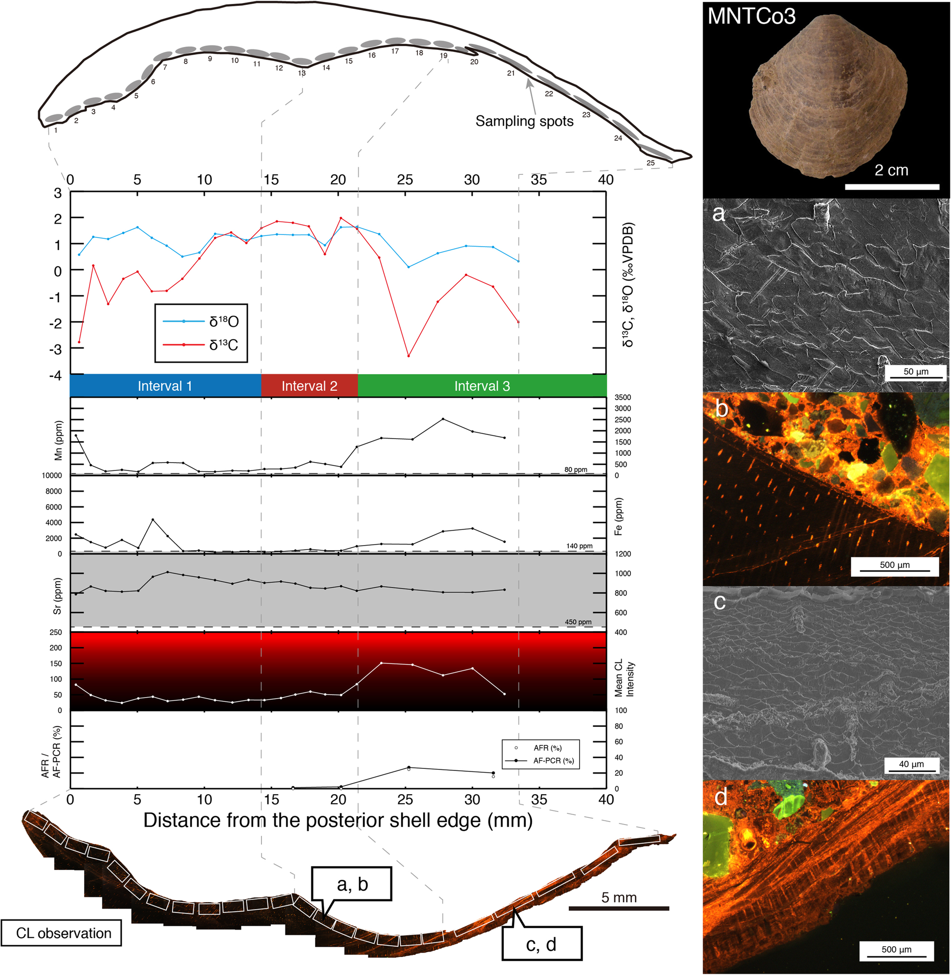 The effects of meteoric diagenesis on the geochemical composition