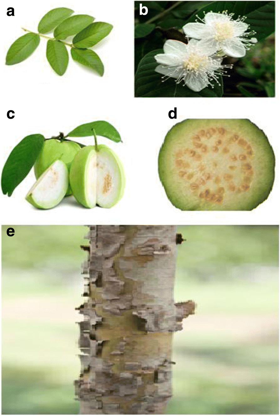 The phytochemistry and medicinal value of Psidium guajava