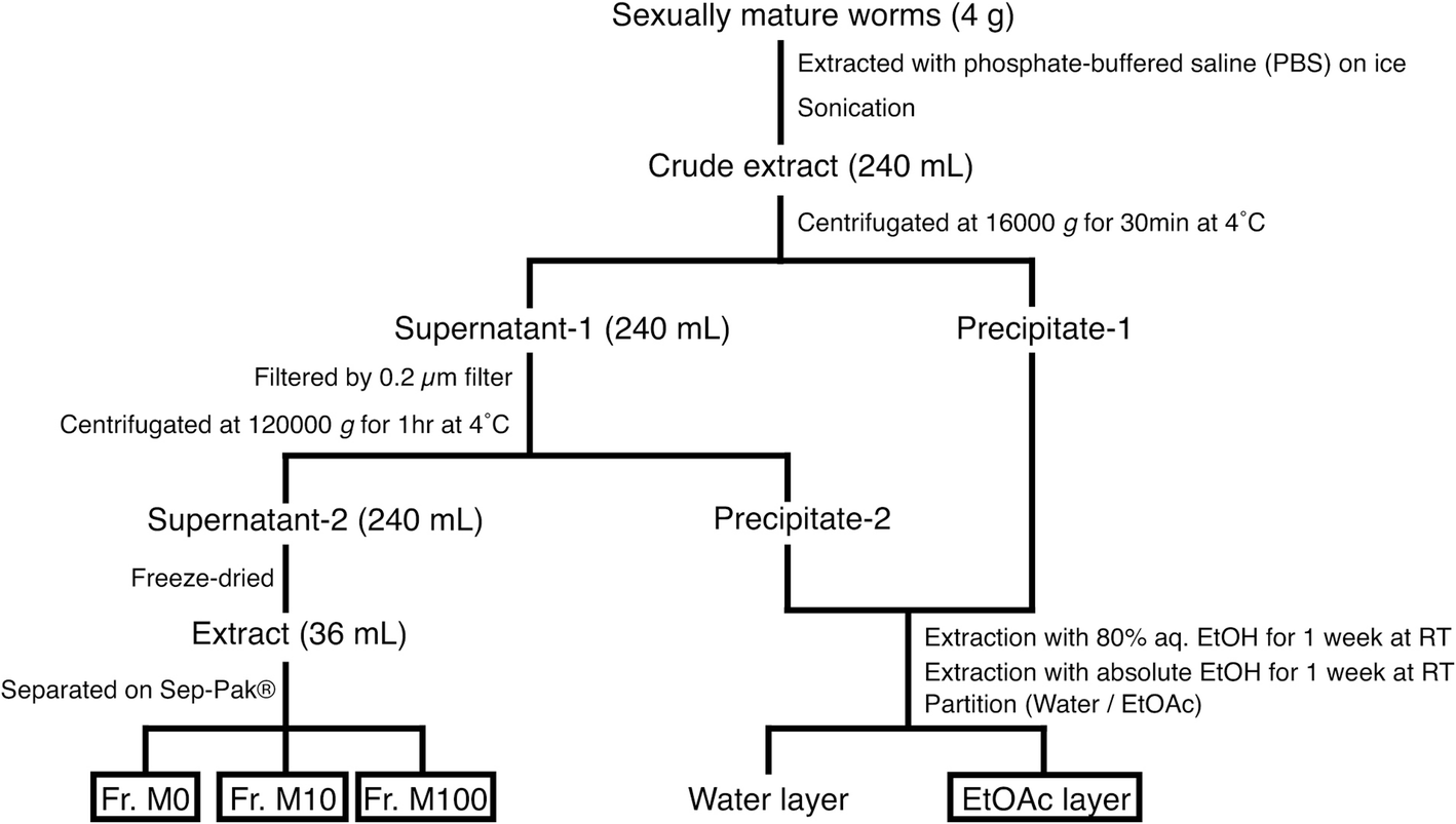 e81d3bda2fd7 A comprehensive comparison of sex-inducing activity in asexual worms ...
