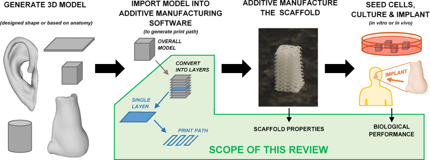 Review of additive manufactured tissue engineering scaffolds