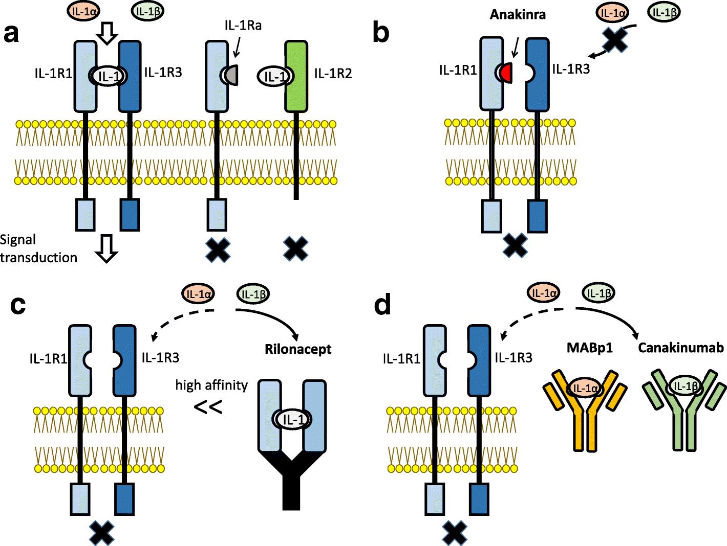 The role of interleukin-1 in general pathology | SpringerLink