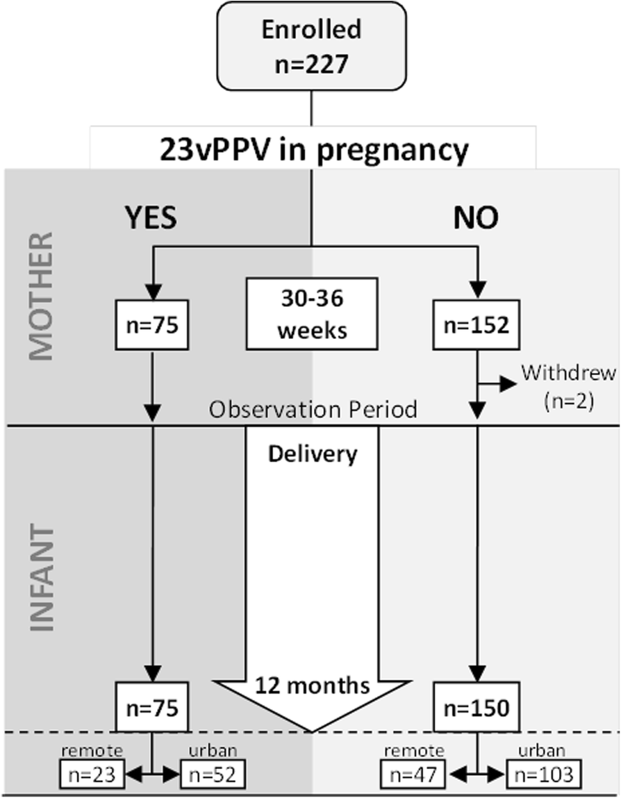 Impact of the 23-valent pneumococcal polysaccharide