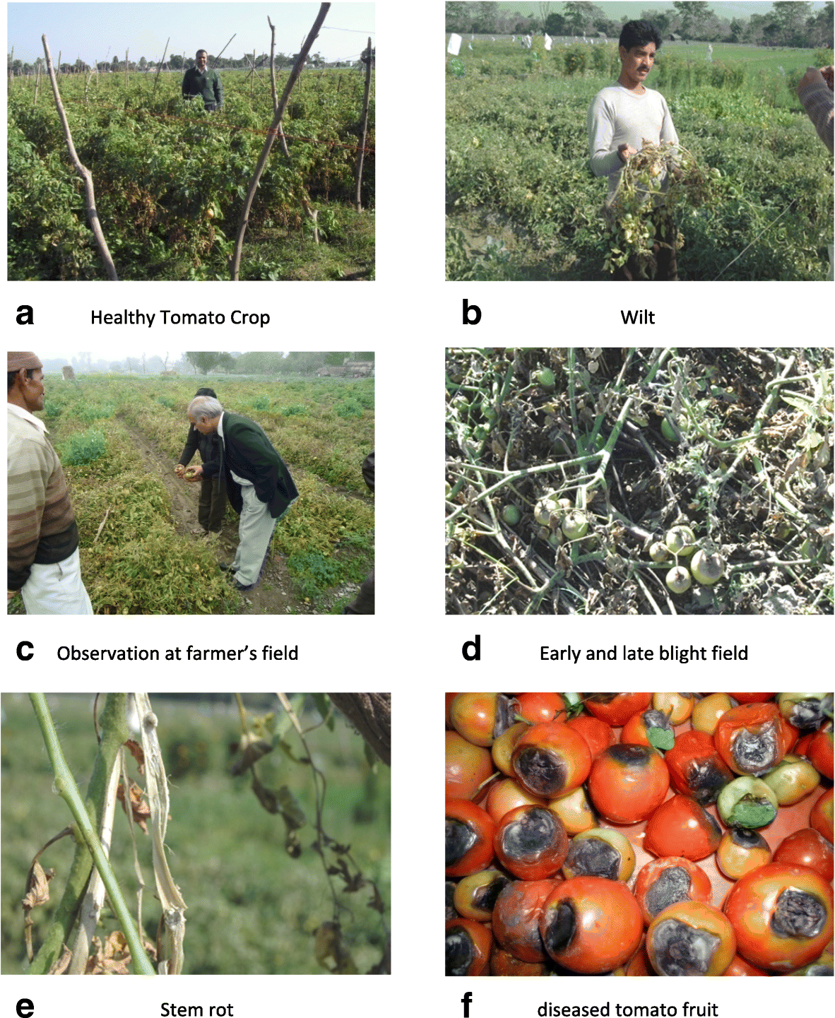 Field efficacy of different combinations of Trichoderma