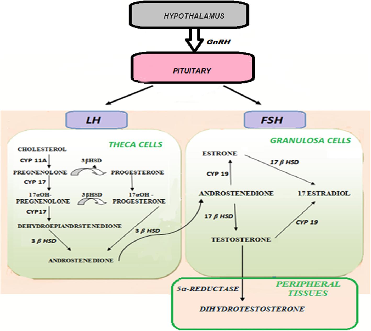 Hyperandrogenismi