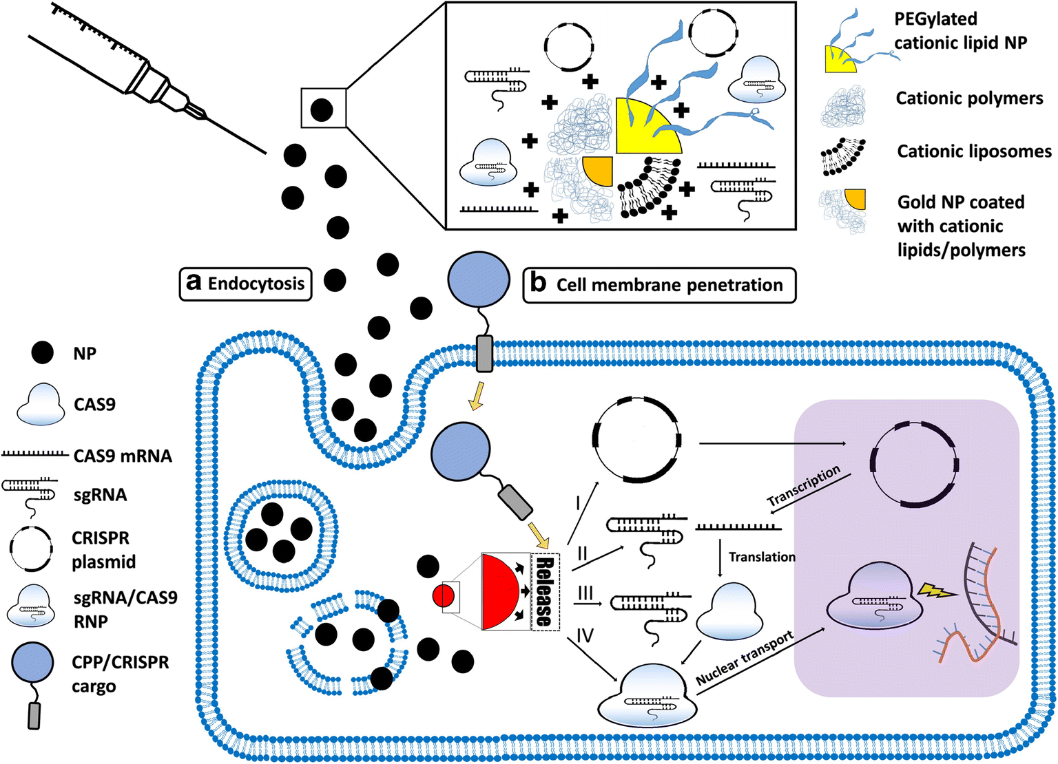 Nanoparticle-Based Delivery of CRISPR/Cas9 Genome-Editing