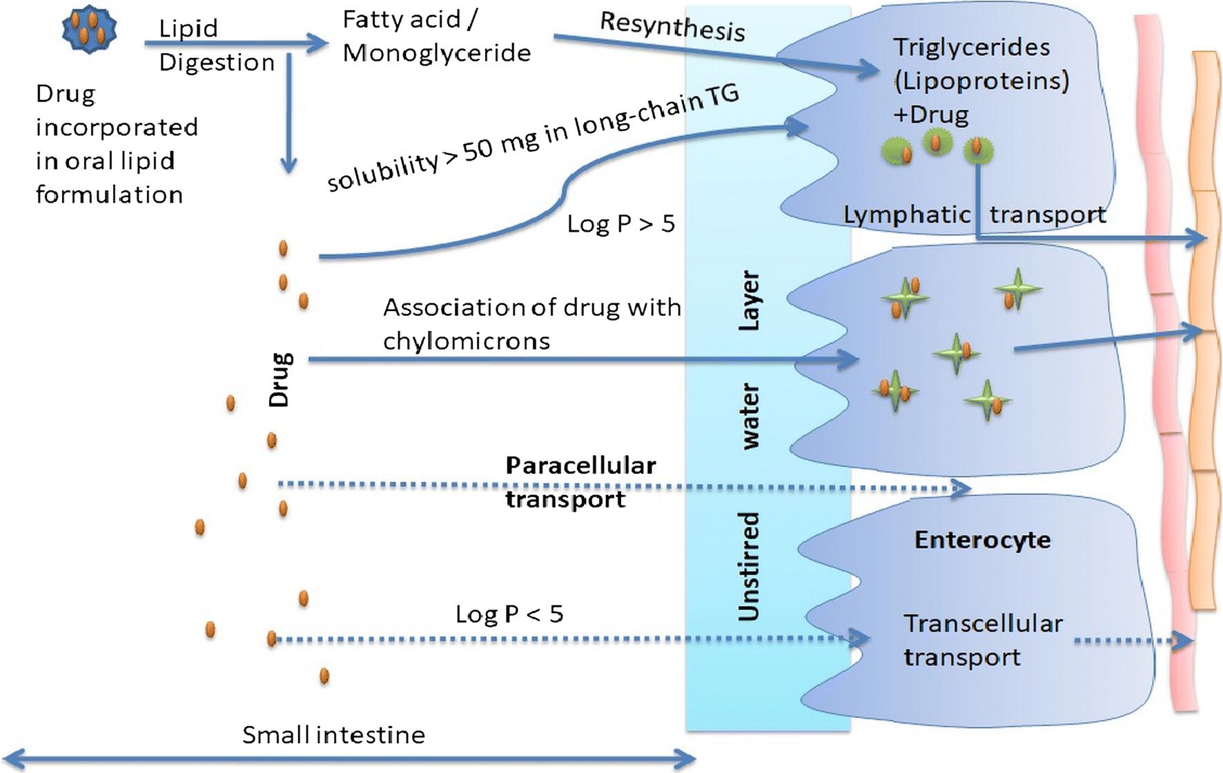 Lipid-Based Oral Formulation Strategies for Lipophilic Drugs