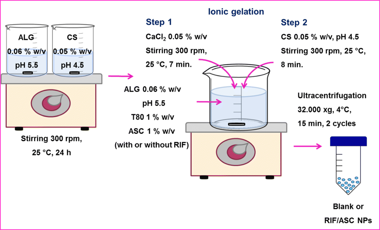 Promising Chitosan-Coated Alginate-Tween 80 Nanoparticles as