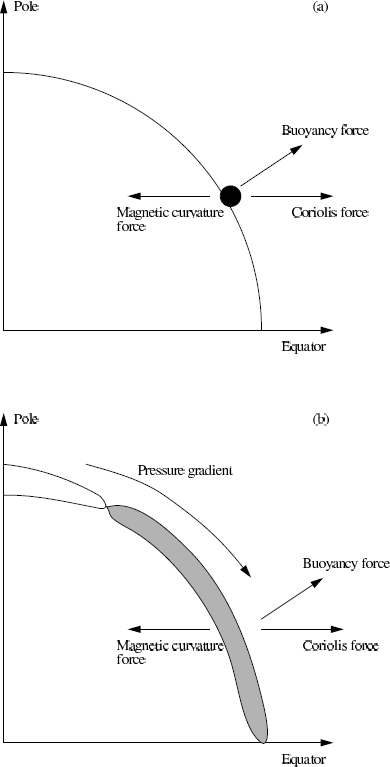 Magnetic Fields in the Solar Convection Zone | SpringerLink