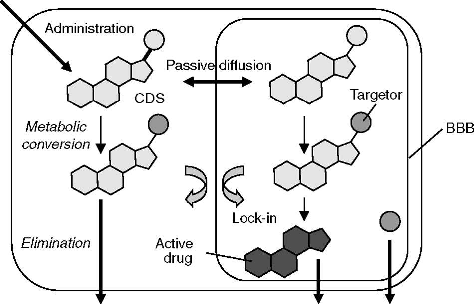 Brain-Targeted Drug Delivery | SpringerLink