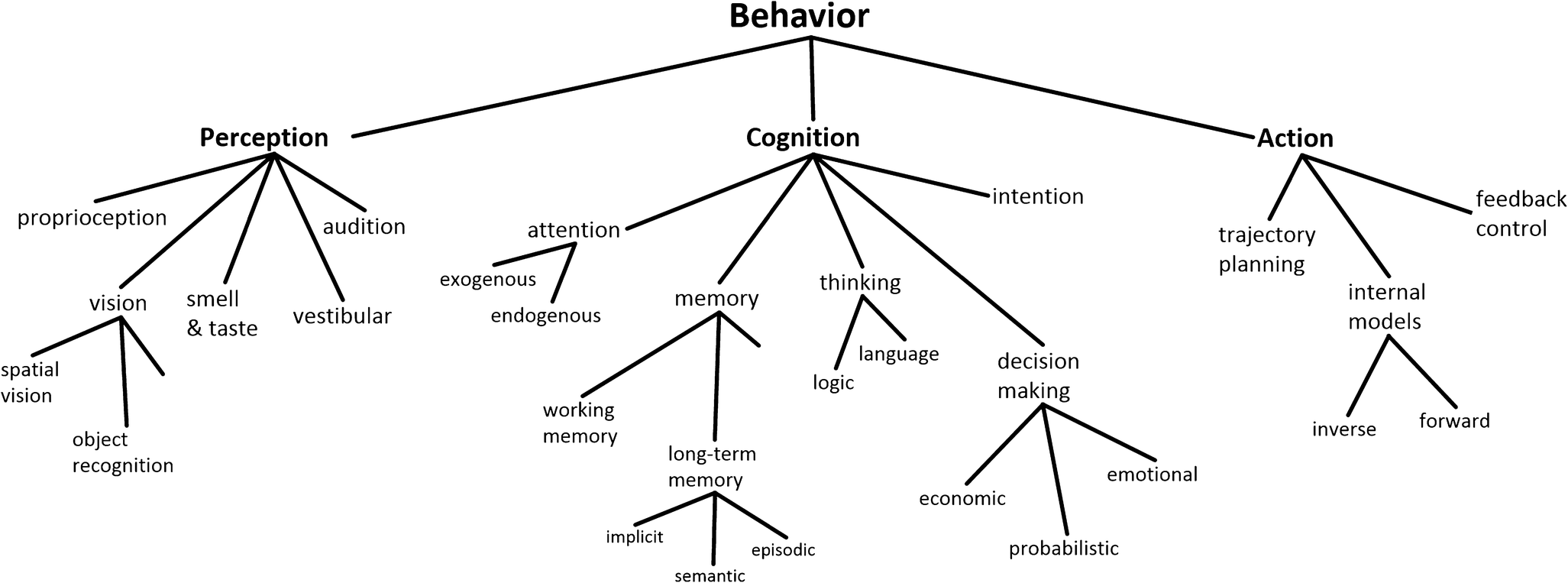 Cognition And Behavior Attention >> Resynthesizing Behavior Through Phylogenetic Refinement