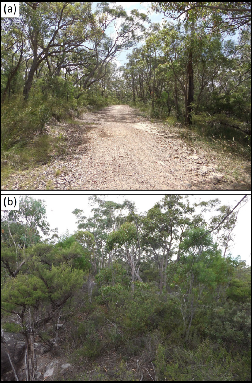 Ecological Impacts of Fire Trails on Plant Assemblages in Edge