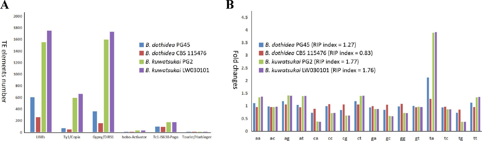 Comparative genomics of Botryosphaeria dothidea and B  kuwatsukai