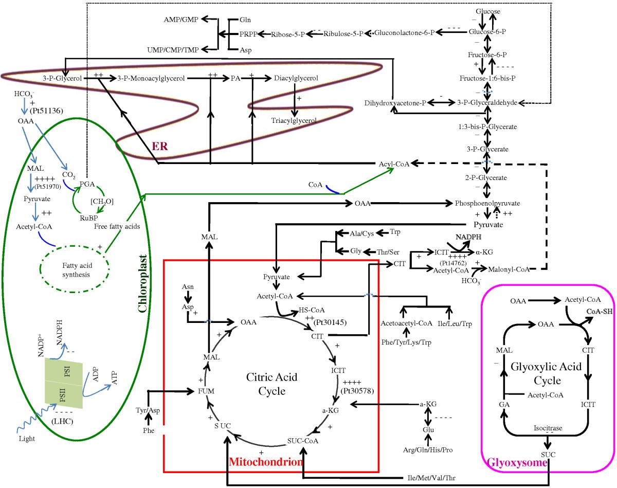 Molecular And Cellular Mechanisms Of Neutral Lipid