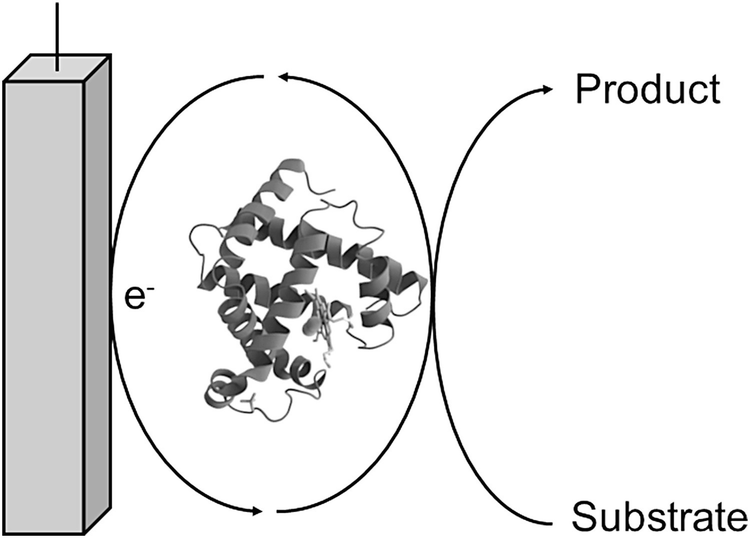 Enzyme Based Electrobiotechnological Synthesis