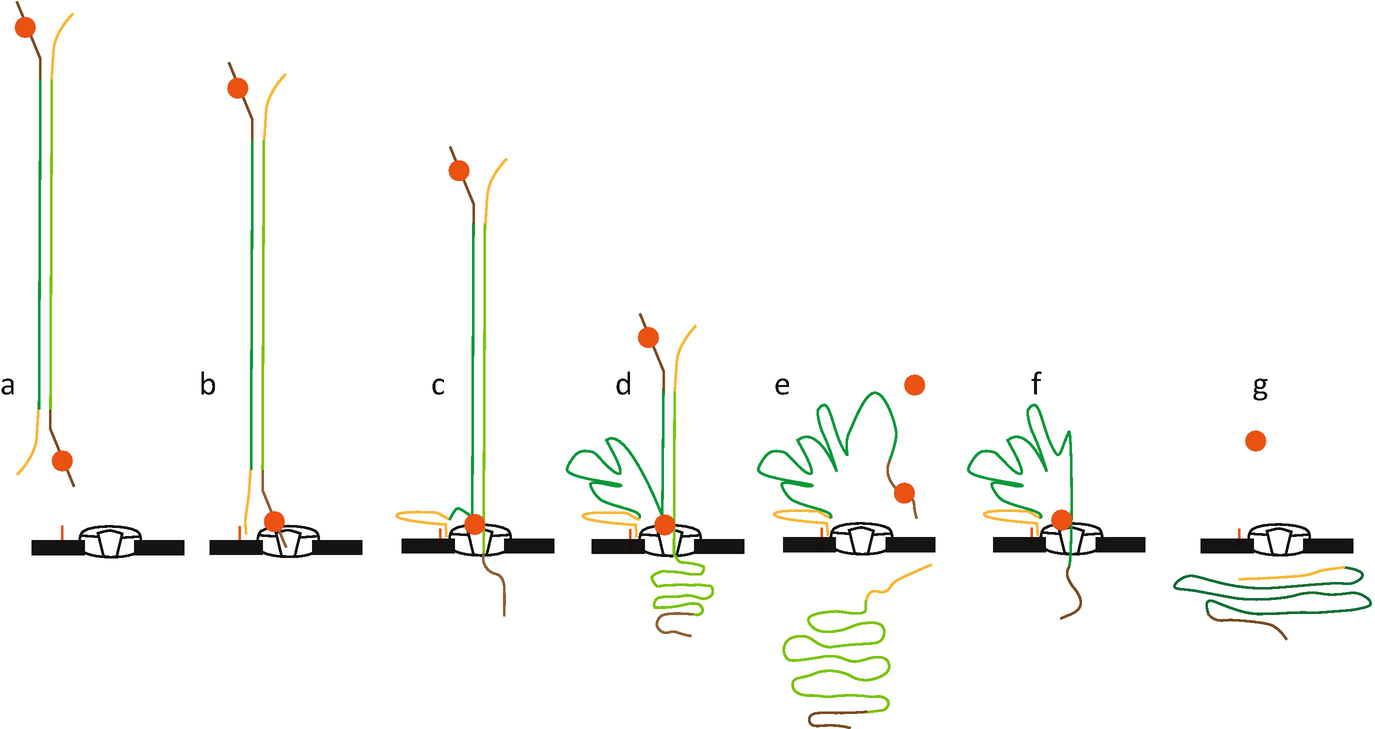 Sequencing Plant Genomes | SpringerLink