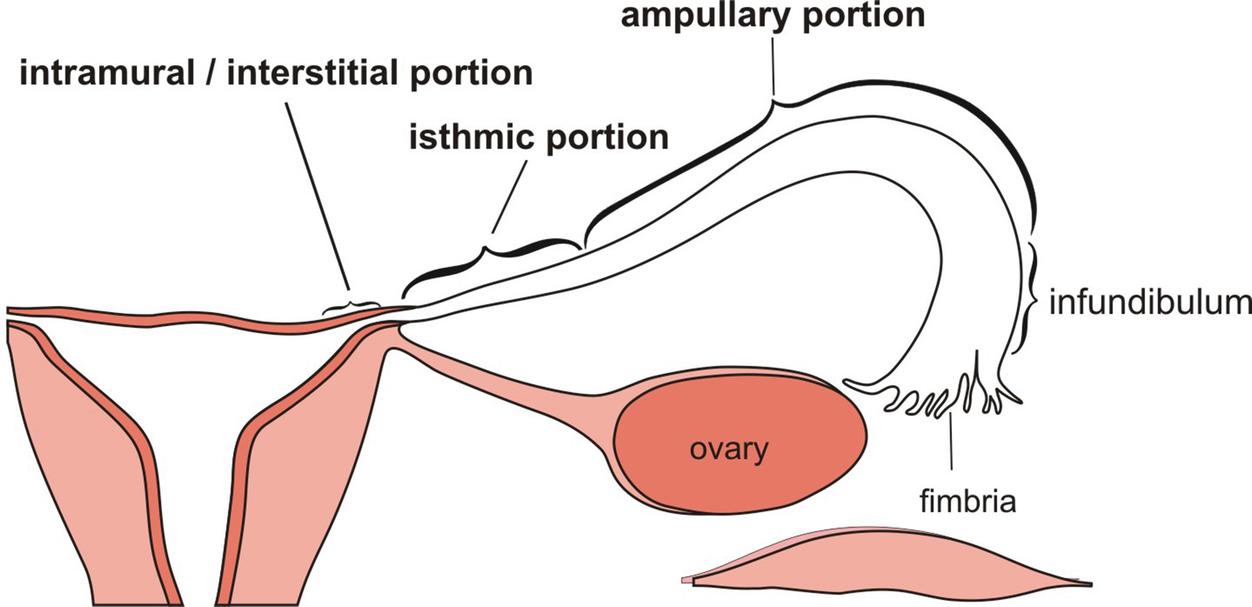 Evaluation of Infertility   SpringerLink