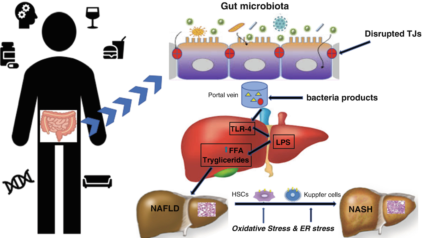 Fighting Fatty Liver Diseases with Nutritional Interventions