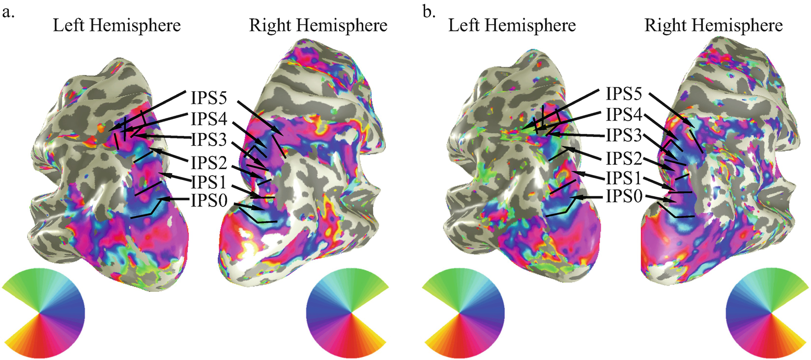 Topographic Mapping of Parietal Cortex | SpringerLink