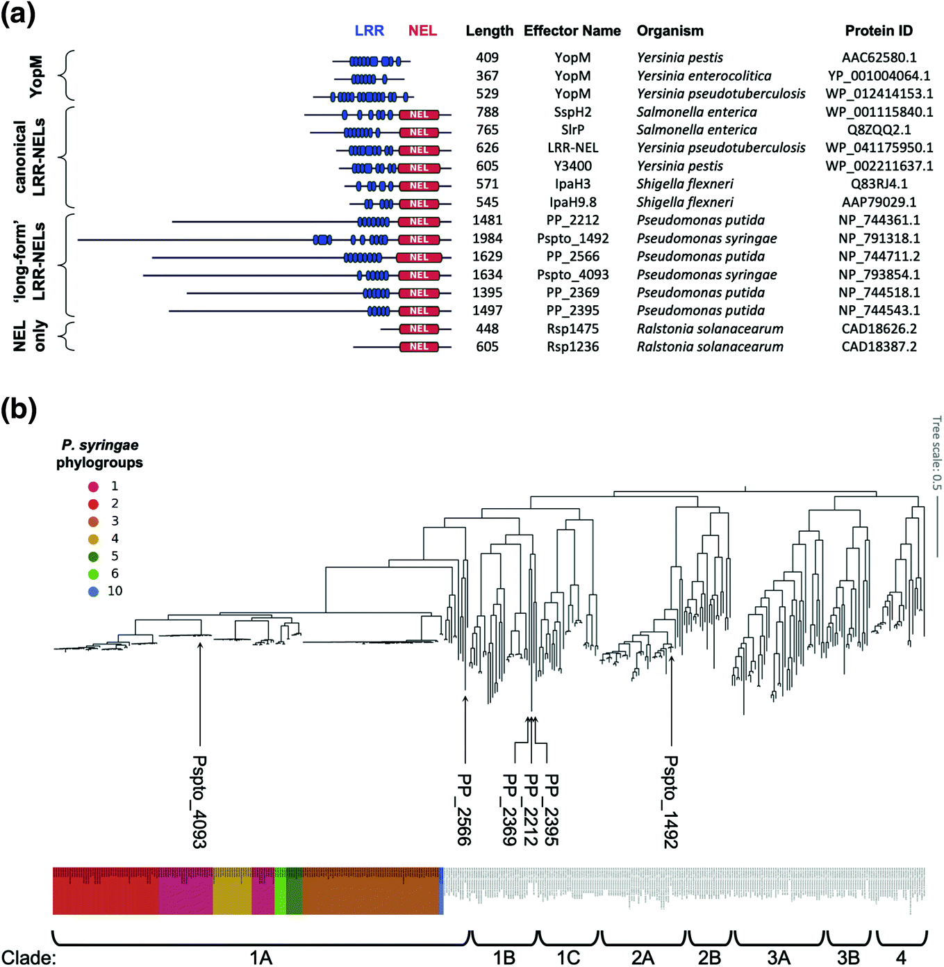 Diversity and Evolution of Type III Secreted Effectors: A