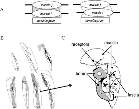 Nature Of Motor Control Perspectives And Issues