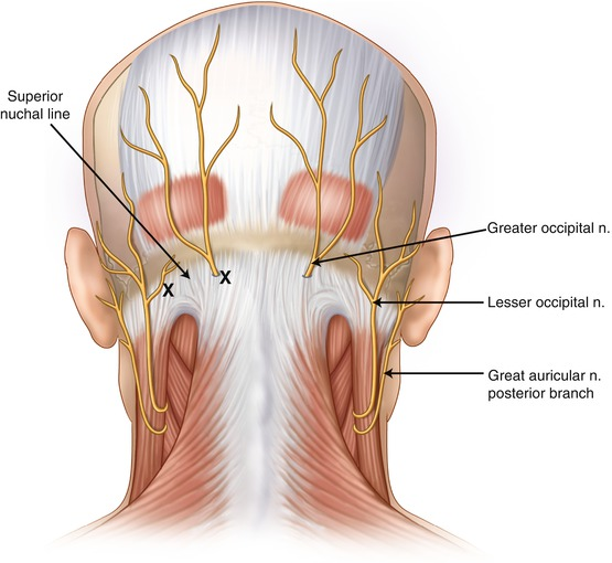 Clinical Anatomy Of The Head And Neck Springerlink