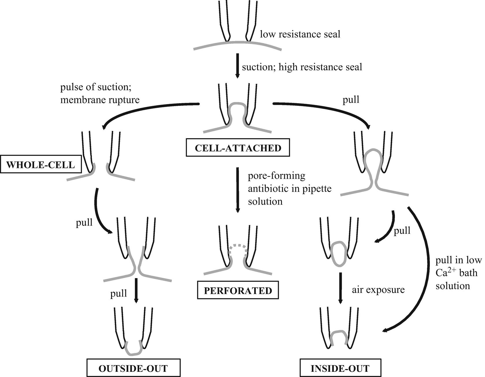 图1 膜片钳的几种记录方式。该示意图说明了膜片钳针尖与细胞膜表面的相互作用,以及达成膜片钳装置内各种记录方式的步骤。