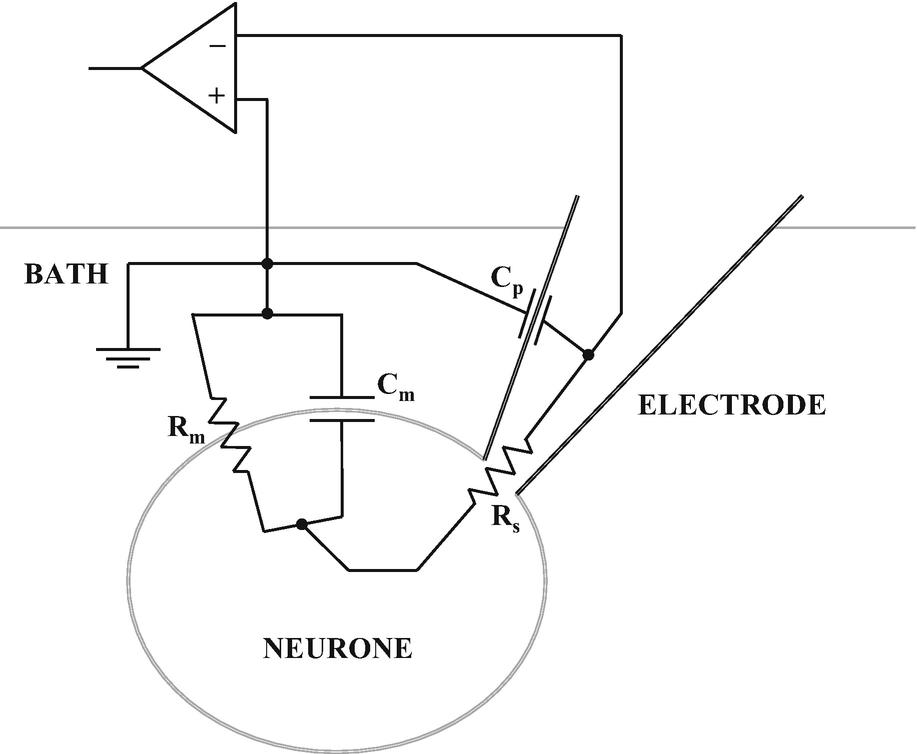 图2 全细胞膜片钳配置的等效电子电路。该示意图表明膜电阻( <i>R<sub>m</sub></i> )和膜电容( <i>C<sub>m</sub></i> )彼此并联,但与电极电容( <i>C<sub>p</sub></i> )以及电极电阻( <i>R<sub>s</sub></i> )串联。