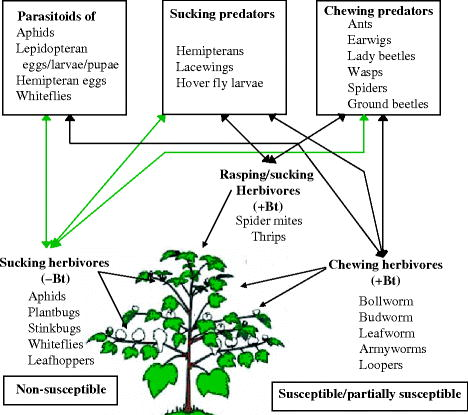 Transgenic Cotton for Sustainable Pest Management: A Review ...
