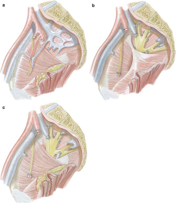 Großartig Menschliche Anatomie Und Physiologie Marieb Pdf Fotos ...