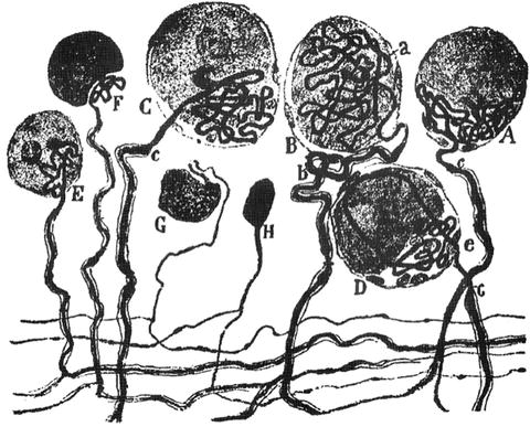 The Anatomy Of Pain