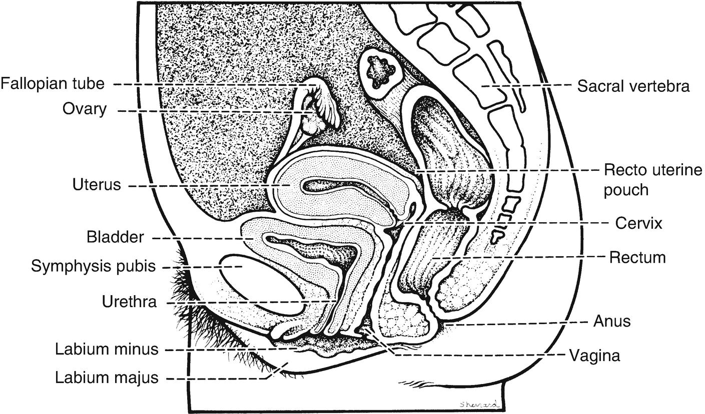 Groß Schwarz Double Vaginal