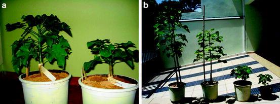 Breeding and Biotechnology of Jatropha curcas   SpringerLink on