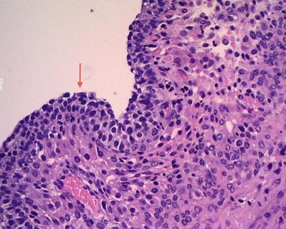 Histopathology | SpringerLink