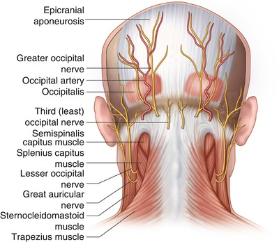 Occipital Nerve Blocks | SpringerLink