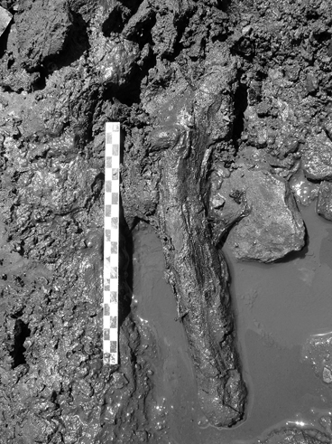 The inter tidal zone site of la olla earlymiddle holocene human open image in new window fandeluxe Images