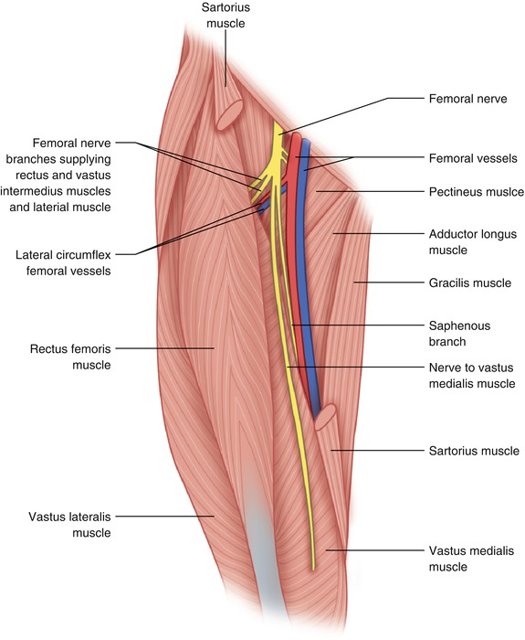 Tumor In The Anterior Thigh Springerlink