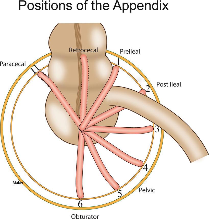 Appendix Springerlink