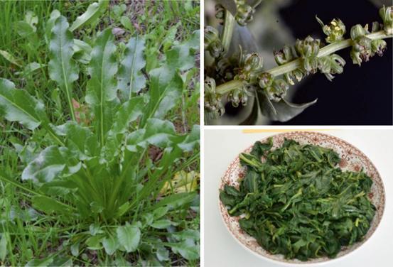 ethnobotanical and food composition monographs of selected rh link springer com