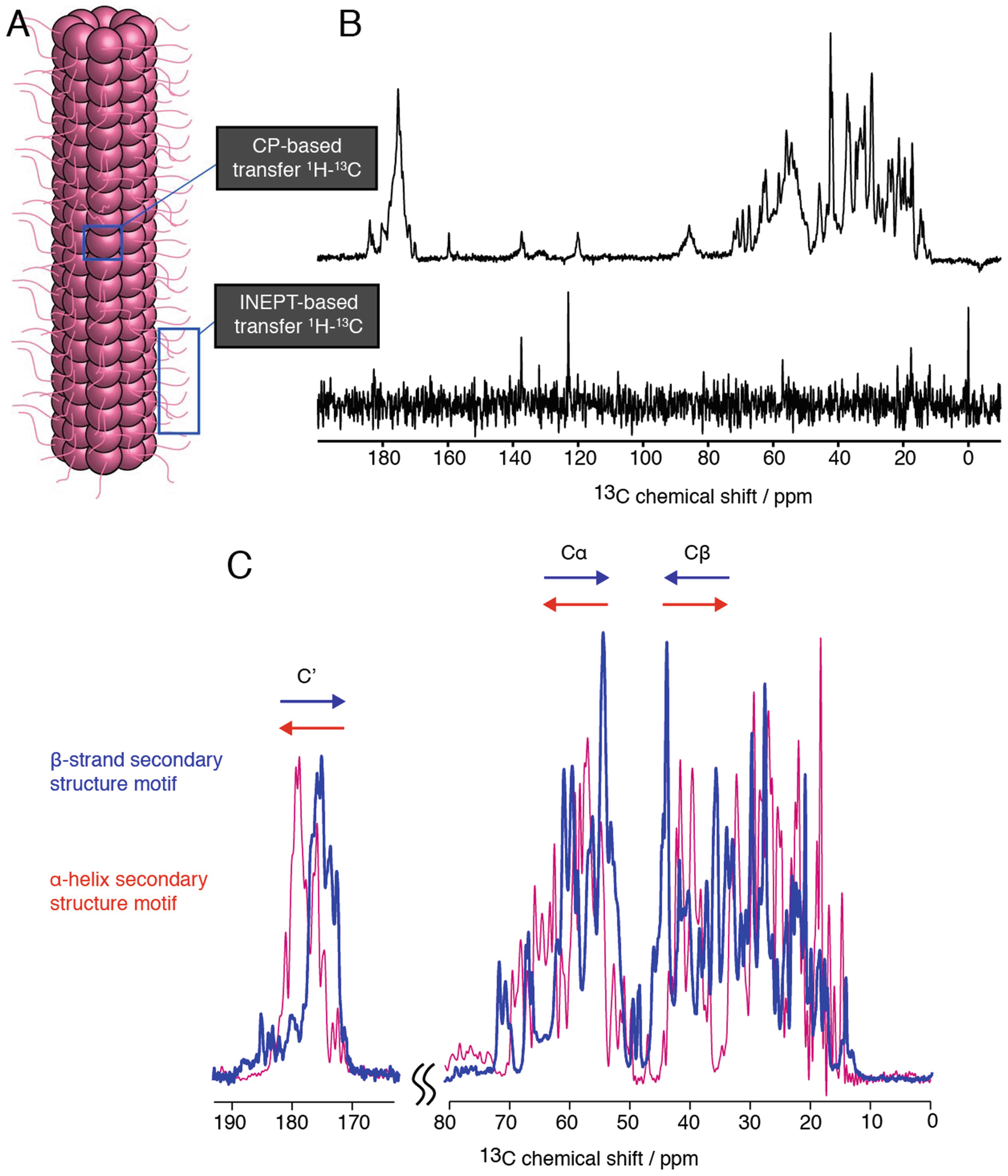 Bacterial Filamentous Appendages Investigated By Solid State Nmr Bacteria Can Have With Specific Functions Open Image In New Window