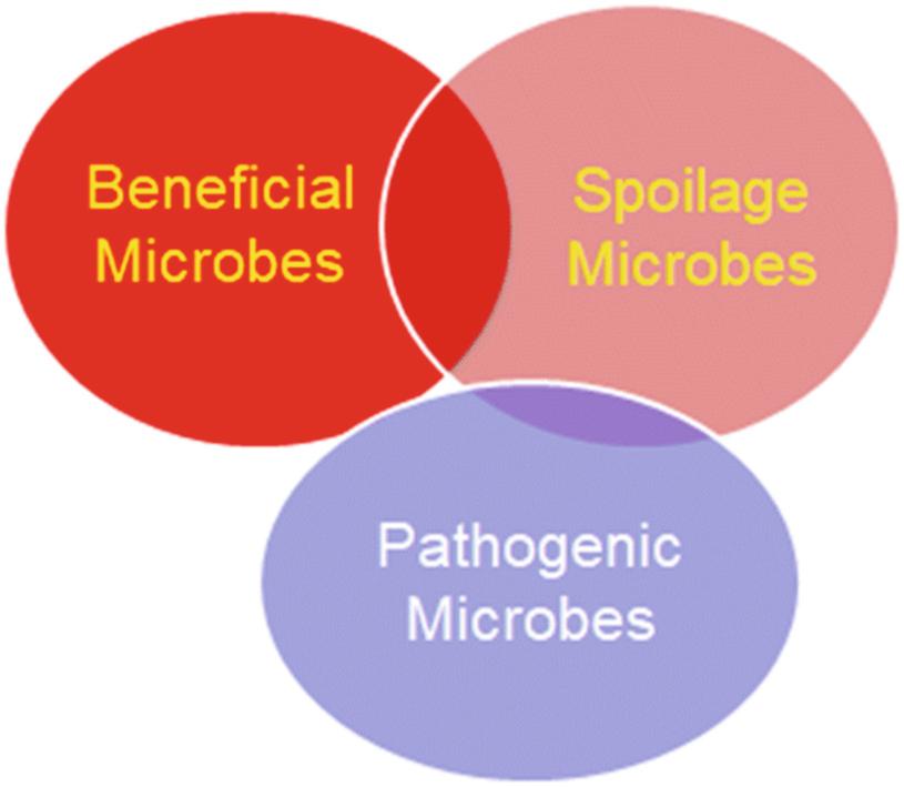 Introduction to Foodborne Pathogens | SpringerLink