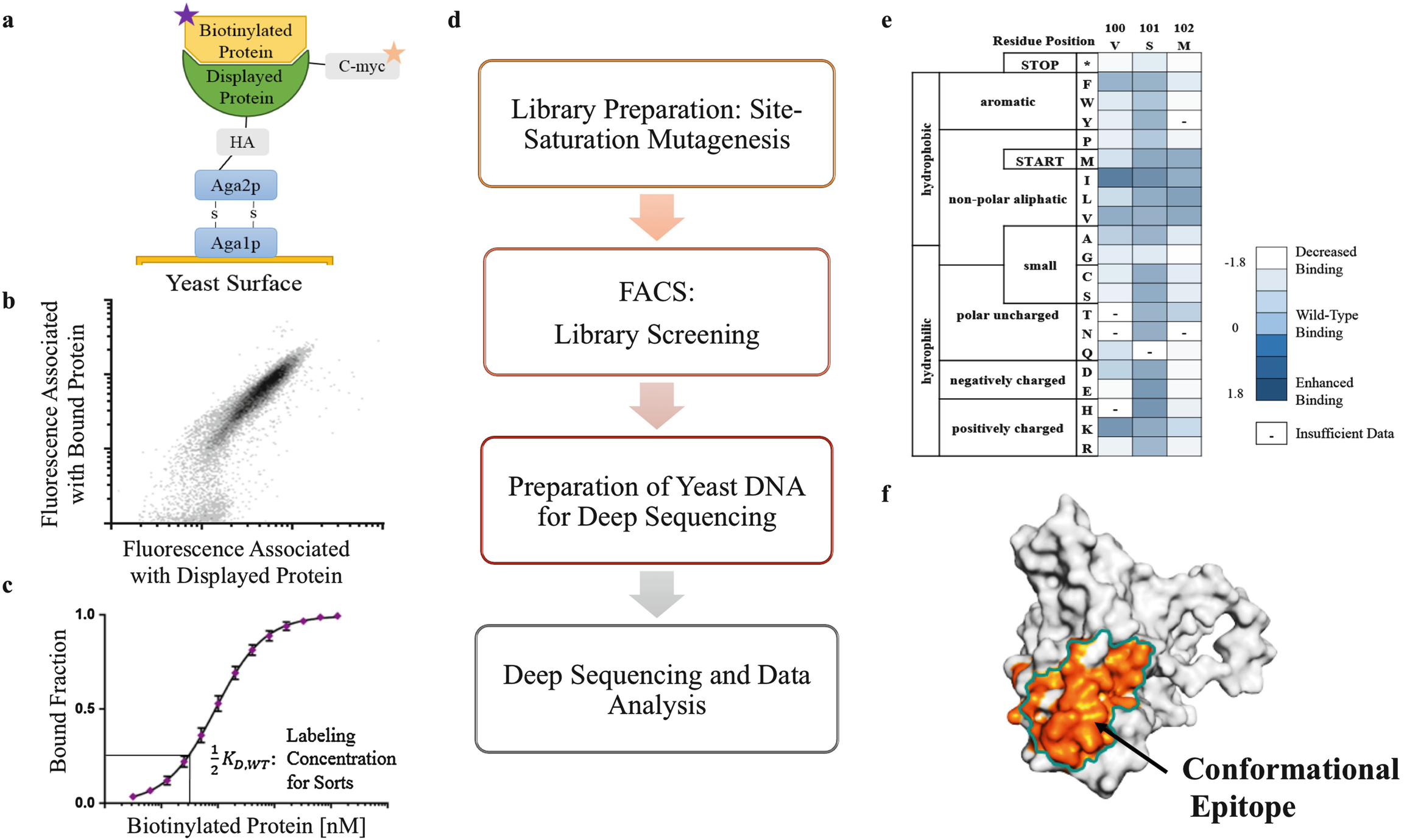 Characterizing Protein Protein Interactions Using Deep Sequencing