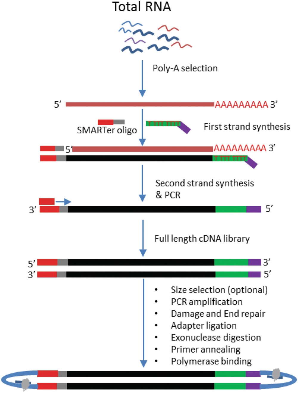 Current and Future Methods for mRNA Analysis: A Drive Toward