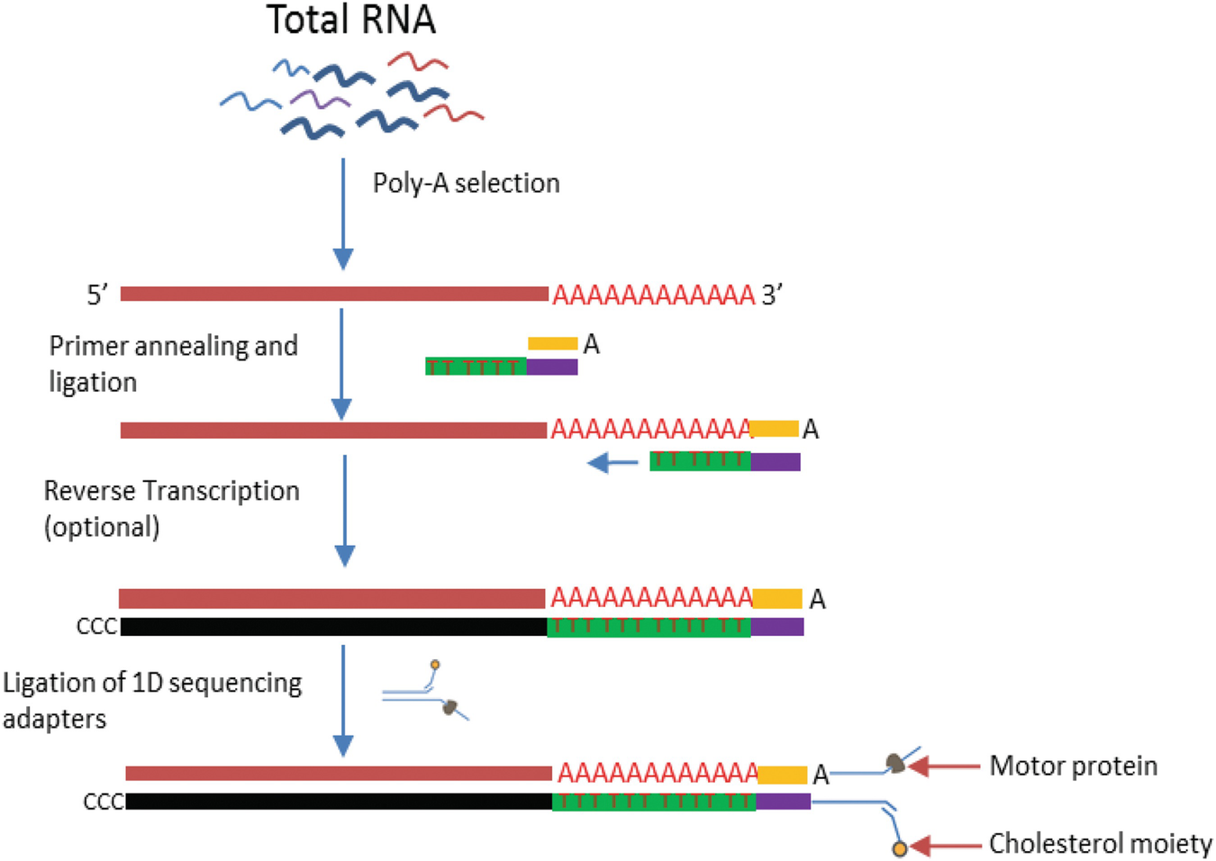 Current and future methods for mrna analysis a drive toward single open image in new window fandeluxe Image collections